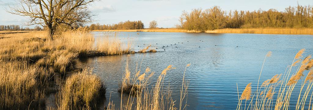 Deze wet vervangt de flora-en faunawet