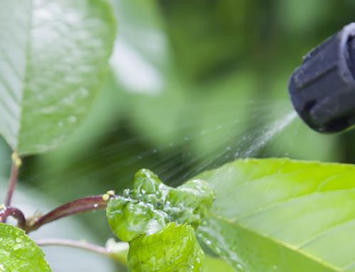Verbod op chemische onkruidbestrijding nog steeds geldig in 2019. Wat kunt u nog wel gebruiken?