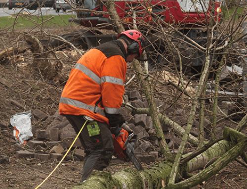40 Bomen maken plaats voor BP-tankstation