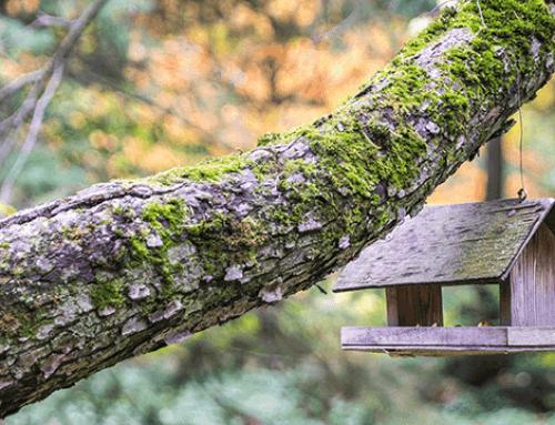 3 Veelvoorkomende boomziektes waar u tijdig bij moet zijn