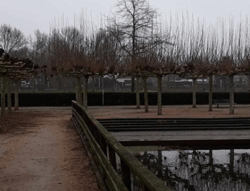 Veelvoudig snoeiwerk van zogenoemde 'dakplatanen' in Papendrecht