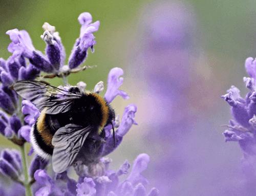 2 Vormen van duurzame beplanting voor uw leef- en werkomgeving