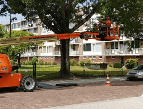 Weids project in heel Dordrecht: snoeien van 1000 essenbomen in verband met Essentaksterfte