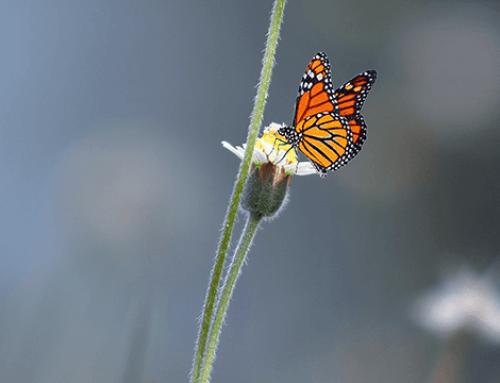 Help de vlinder een handje en creëer een vlindervriendelijke buitenruimte met deze 5 planten