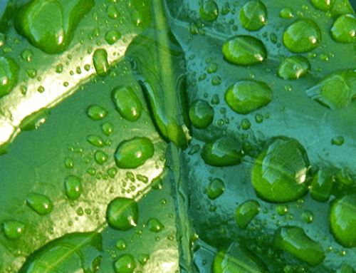 Uw achtertuin ook klimaatadaptief maken? 7 Tips!