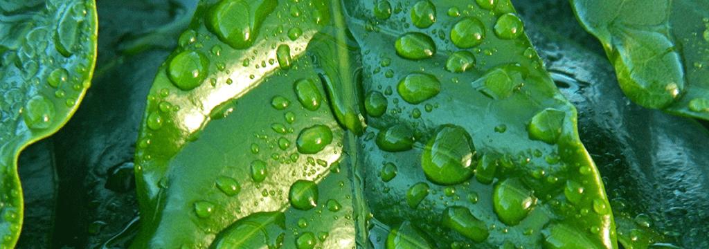klimaatadaptief