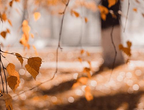 Waarom mini-bossen helpen tegen de gevolgen van het klimaat