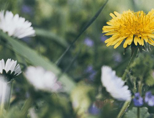 4 Snelle manieren voor een onkruidarme tuin. Een heel jaar lang