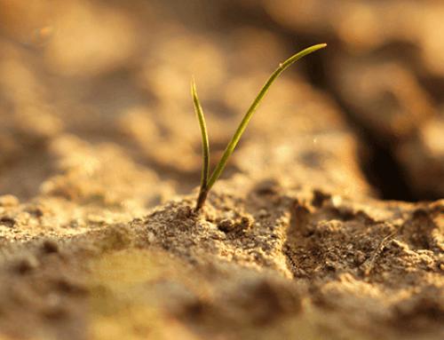 Bereid uw tuin voor op aankomende droogte