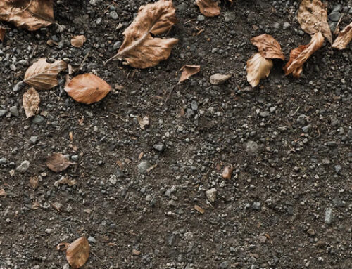 Het nut van bodemleven