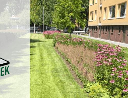 Samen met Stichting Steenbreek zorgen we voor meer groen in uw buurt!