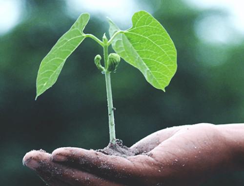 Steeds meer focus op 'duurzaamheid' bij publieke aanbestedingen!