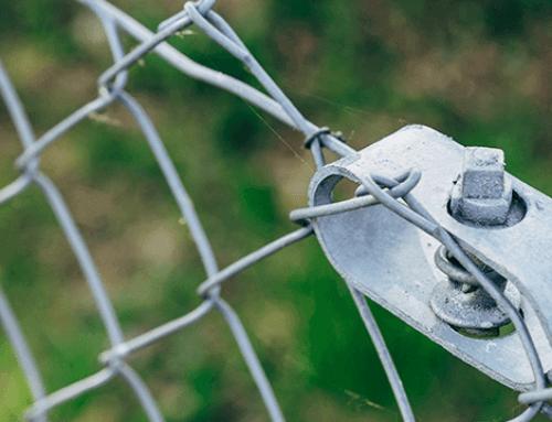 Mogelijk handelsverbod op Aziatische Duizendknopen; internetconsultatie tot 20 november 2020