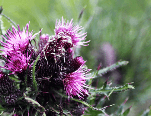 Ook de tuinbranche strijdt voor een verbod op (chemische) bestrijdingsmiddelen voor particulieren